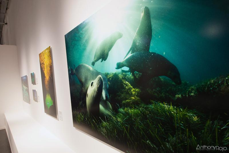 26 Musée mer marine Bordeaux Fradin Anthony Rojo-50