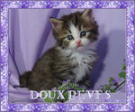 doux_reves_chats
