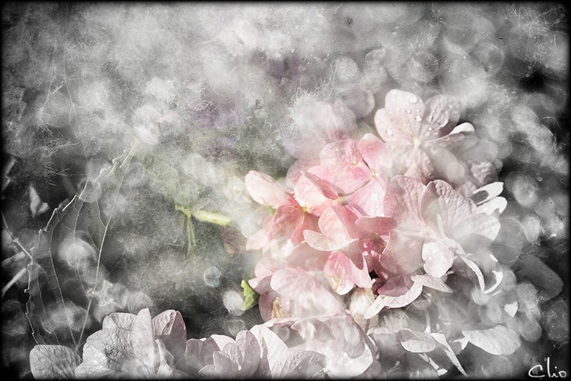 Diane Chesnel CLIO Photos3,,