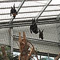 Chauve-souris de Livington et renards volants