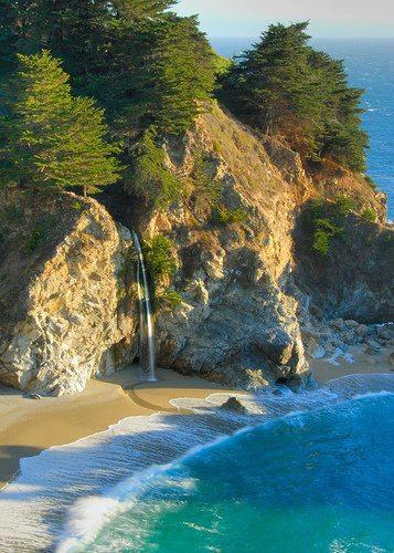 plage arbre mer