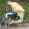 Cyclo-vache