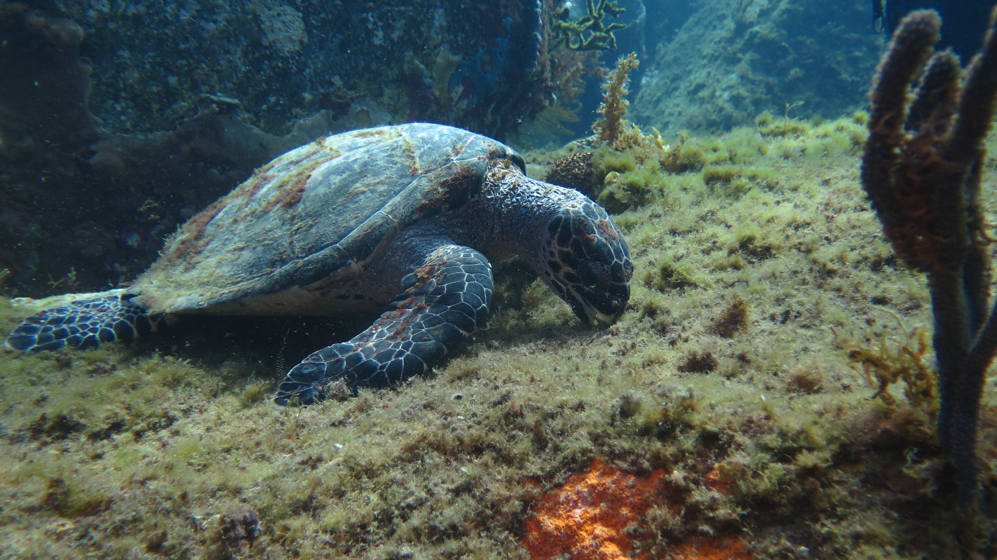 tortue (4)