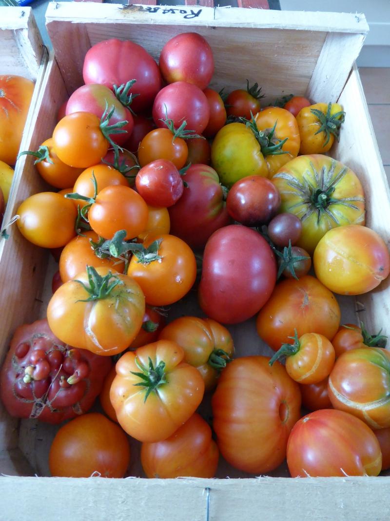 30-tomates du jour (3)