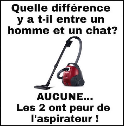 difference homme et chat