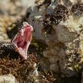 Les dents de la vipere