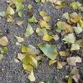 Un automne jonché de taches de rousseur