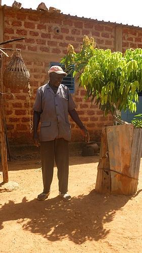 manguier sabcé