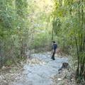 Les sentiers de la montagne de la lune parmi les bambous