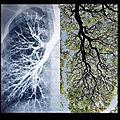 Poumons-humains et poumons de la terre...