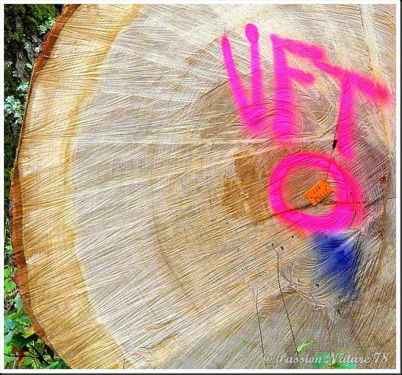 Le bois en forêt (13)