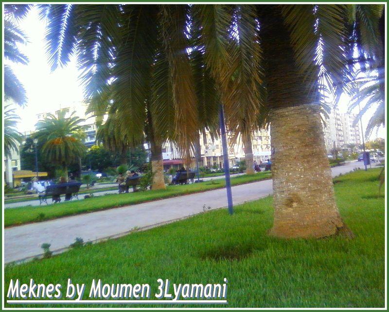 Meknes Hamria 11