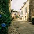 Hortensia breton
