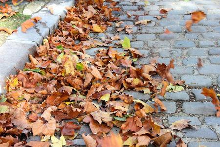 8_automne_0541