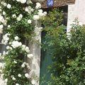 Une rose dans un village ...