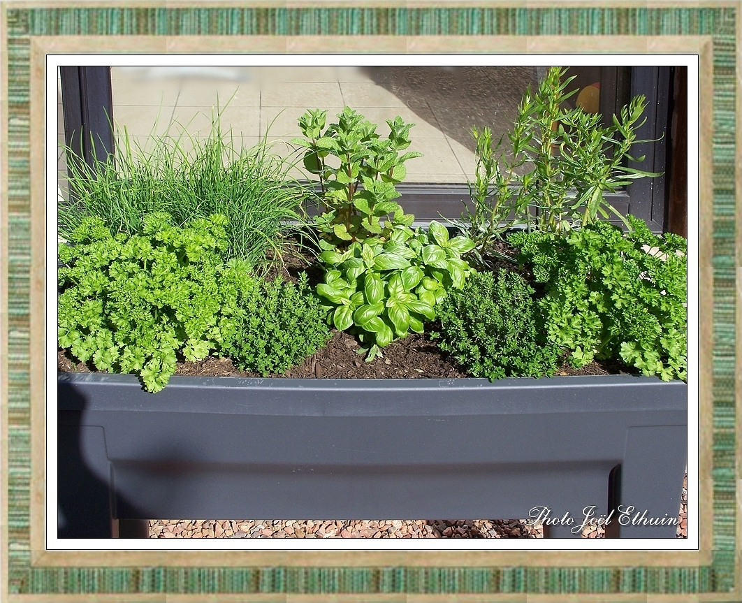 Plantes Aromatiques En Jardinière jardinière aux petites herbes - loisirs et créas de marie