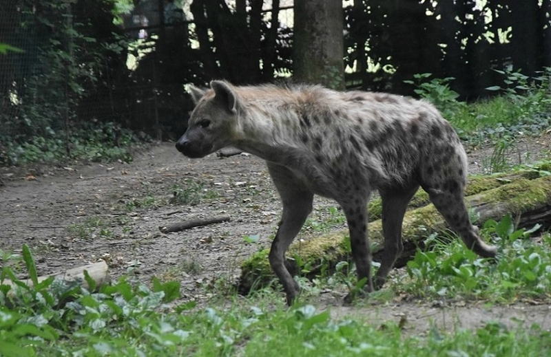 a beauval 2 230
