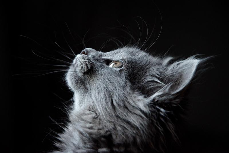cat-4977436_1920