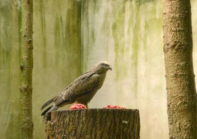 ile_des_oiseaux4