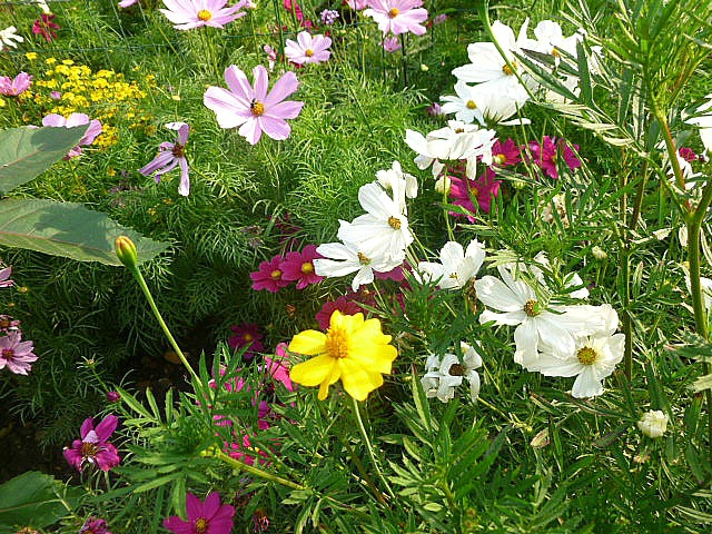 fleurs square
