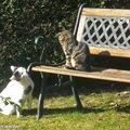Entre chats autour du banc du jardin