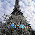 Eiffel Tower with Star Magnolia foreground