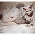 Le chat qui se prenait pour marilyn monroe !