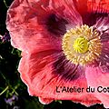 WindowsLiveWriter/couleurs_CAEB/DSCN9352