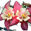 Fleurs-13
