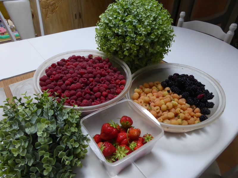 2-framboises, mûres, fraises (1)