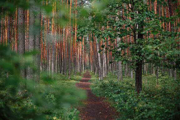 trail-forest