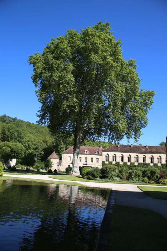 9N3A2292 abbaye de Fontenay