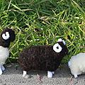 La fête de la laine