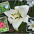 Fleurs 2009-2010 (30)