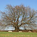 IMG_3237a