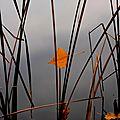 Lac de montorge