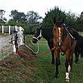 équitation de pleine nature - rallye équestre (9)