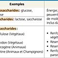 Médecine/bcpst: les molécules des êtres vivants