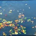 Les feuilles sur l'eau