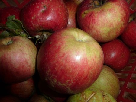 pommes de l'étang (1)