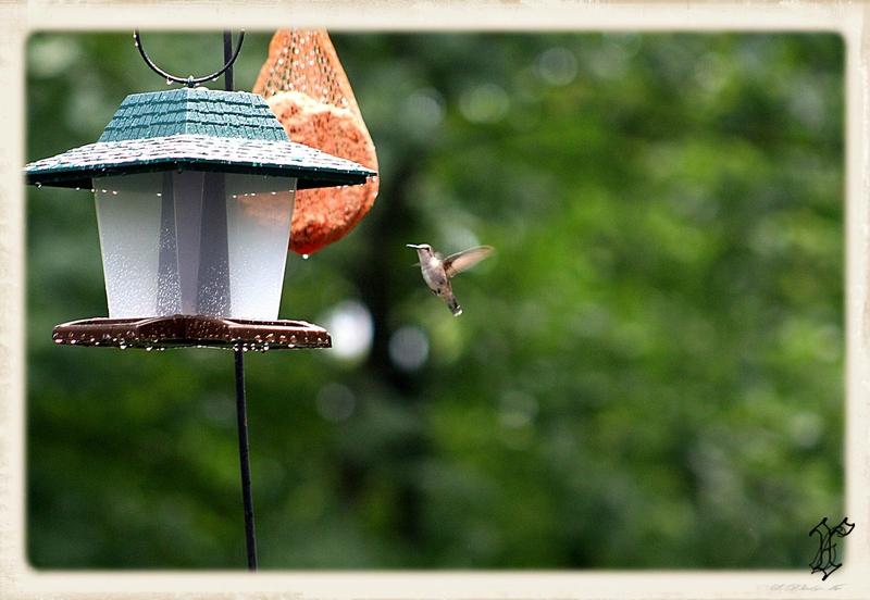colibri QC_1