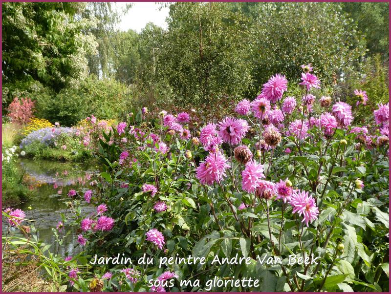 dahlias roses6