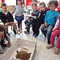 école d'Arleux, la vie de 2 tortues(eau / terre)