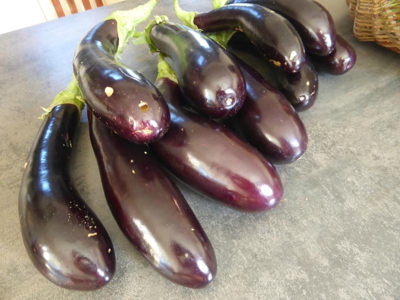 10-aubergines (1)