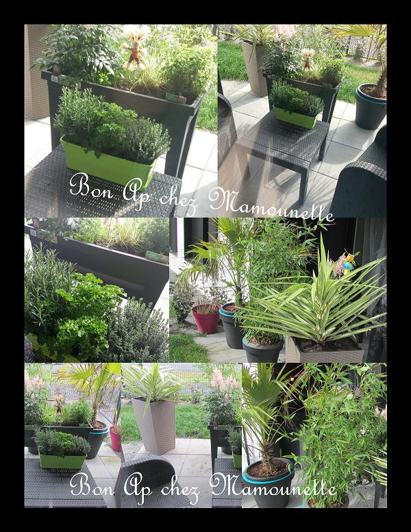 Plantations à l'appart herbes aromatiques