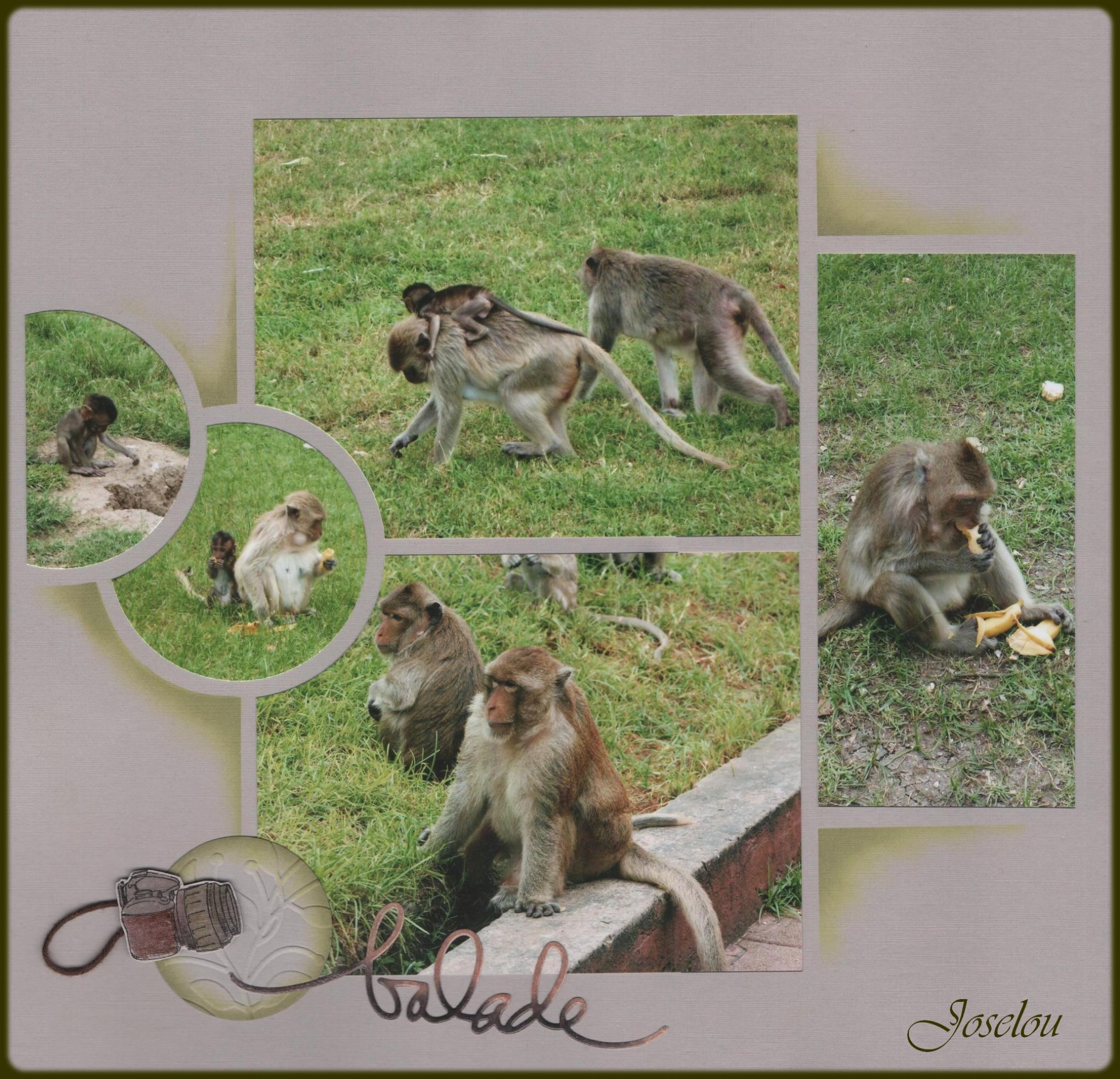 Les macaques de Lopburi 6