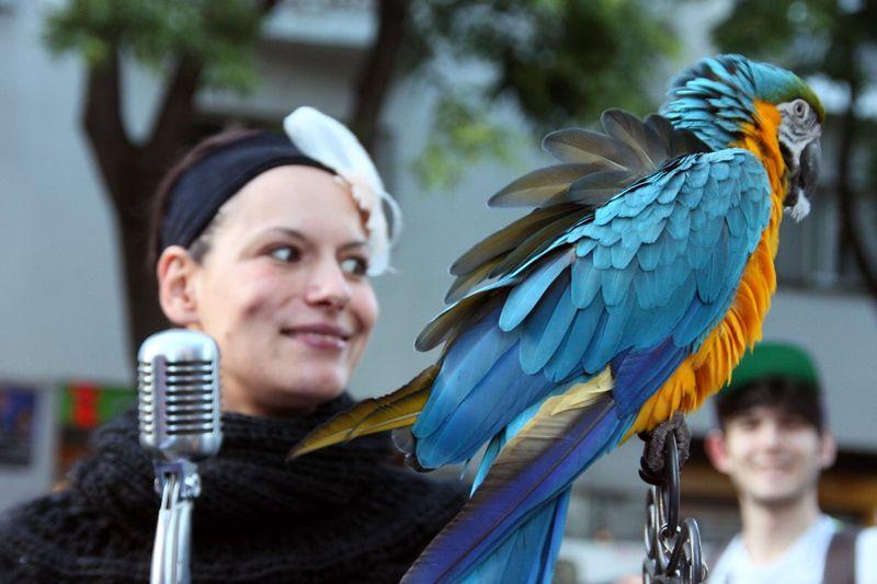 Chanteuse, perroquet, Dénoyez_8904