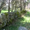 Mur recouvert de mousse - Trajet Le Falzet - Saint Alban sur Limagnole
