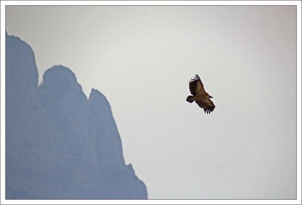 Aragon lulu2 160413 20 vautour montagne