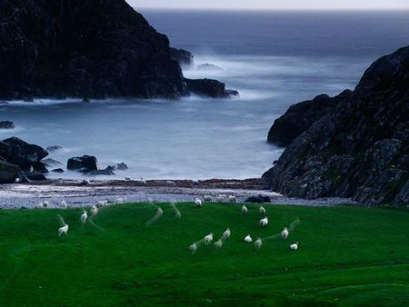 sheep-scotland_13185_990x742
